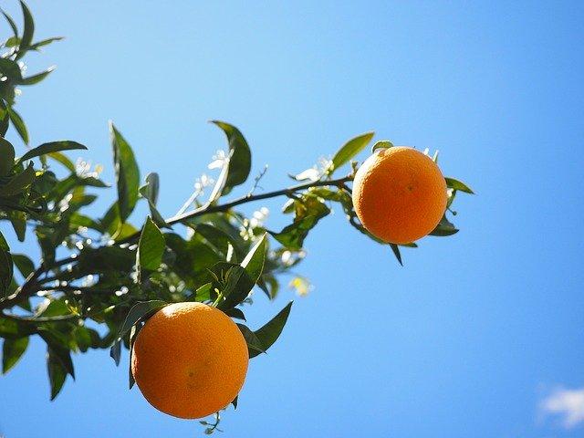 耕種農業の仕事内容とは?果樹生産でスキルを身につけよう