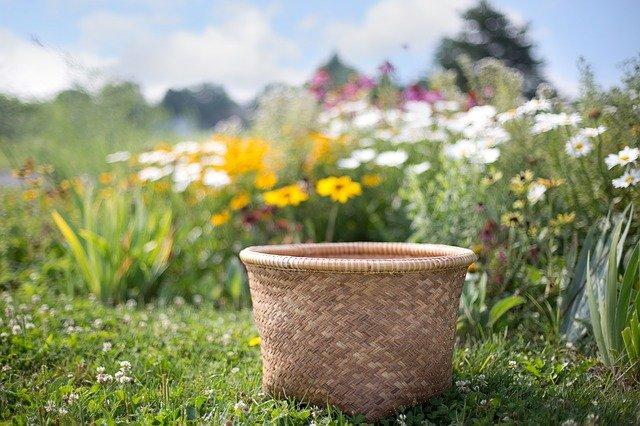 【耕種農業】花は好きですか?花きという仕事とそのやりがいについて
