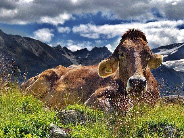 畜産農業の仕事が持つ魅力とは?